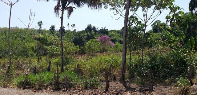 Chácara 6,6 alqueires no Tocantins escriturada - Foto 3