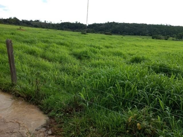 Fazenda de 150 alqueires, com 120 aberto 65 km de Guarantã do Norte -MT - Foto 9