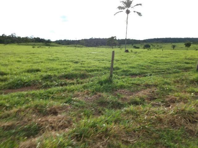 Fazenda de 150 alqueires, com 120 aberto 65 km de Guarantã do Norte -MT - Foto 2