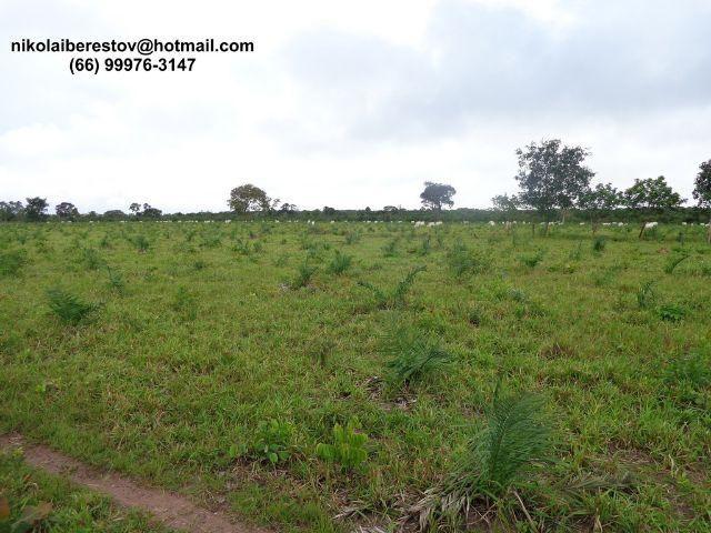 Fazenda 560 hectares nordeste mt nikolaiimoveis
