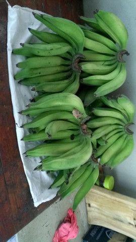 Banana da Terra Orgânica - Foto 2