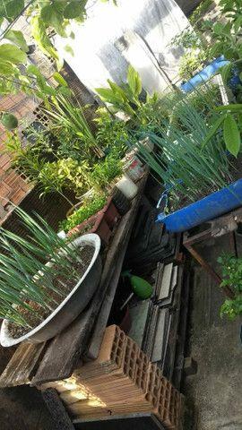 Terra vegetal adubada e com esterco25 kilos  $10,00  - Foto 5