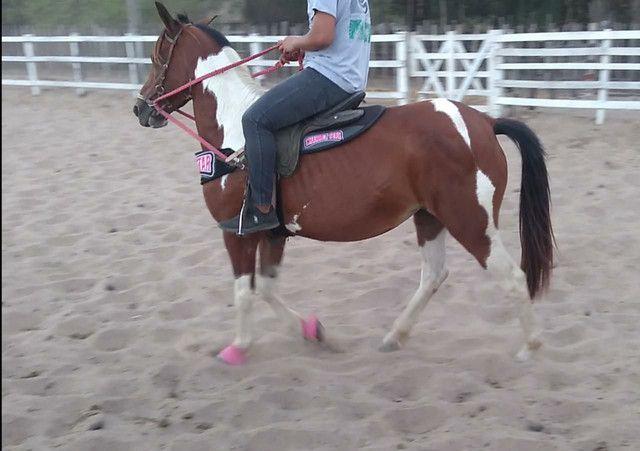 Vendo Égua Paint Horse - Foto 3
