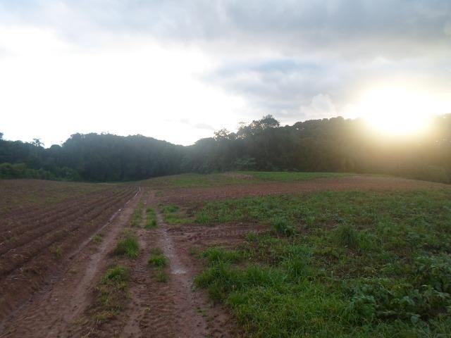 Terreno 1 alqueire e meio - Foto 9