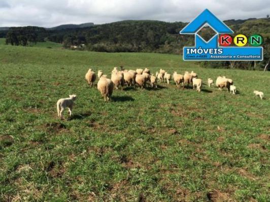 Fazenda - Fazenda a Venda no bairro Área Rural de Ponta Grossa - Ponta Grossa, P...