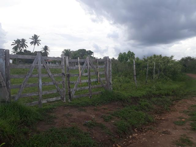 Granja com 15 hectares em vera cruz com riacho perene etc - Foto 2