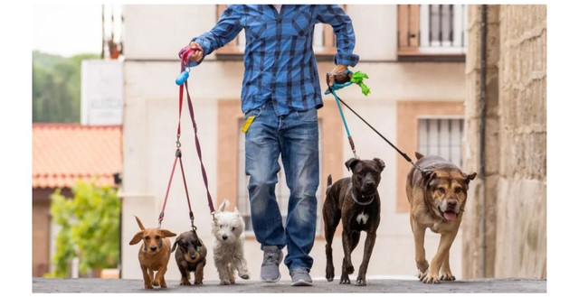 Dog walker/ Passeador de cães