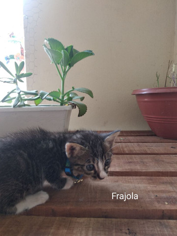Doação de filhotes, gatinhos - Foto 5