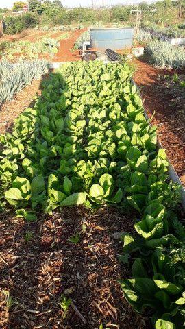Verduras frescas - Foto 3