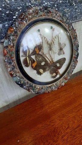Quadro antigo com borboletas - Foto 2