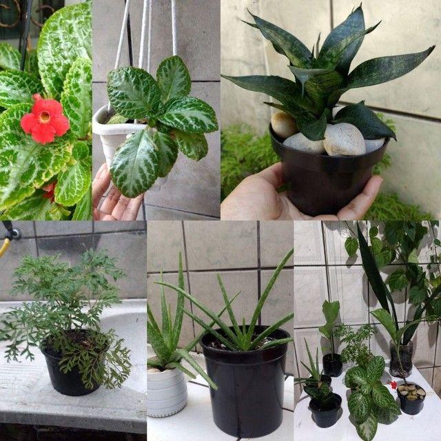 MUDA DE PLANTAS | qualquer muda por 10 reais
