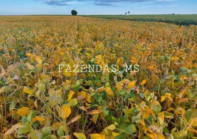 Fazenda 245 hectáres Dourados-MS terra argilosa 40 anos em lavoura - Foto 4