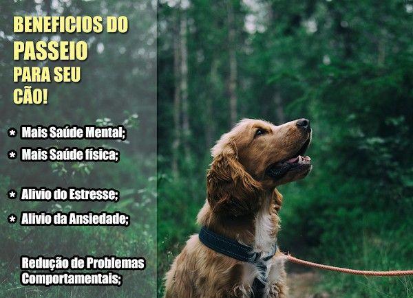 PetSitter & DogWalker ( Passeador de Cães ) - Foto 2