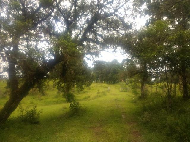 Fazenda em Tijucas do Sul -PR - Foto 7