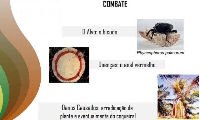 Feromônio Da Broca Do Olho Do Coqueiro Atrativo Promoção! - Foto 2