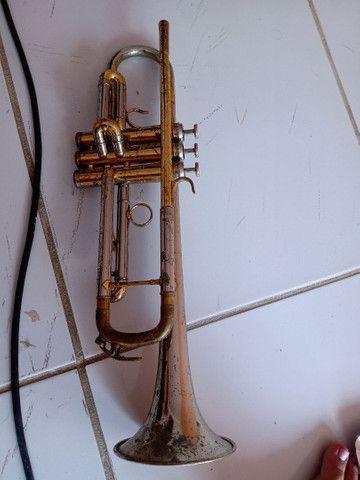 Trompete veril - Foto 2