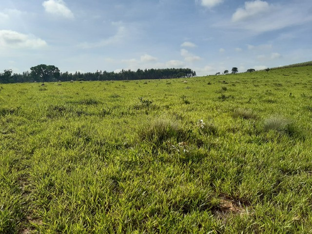 Sitio em monte santo de minas 13 alqueires 1.299.000.00 - Foto 15