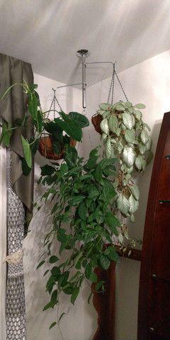 Suporte para plantas - Foto 3