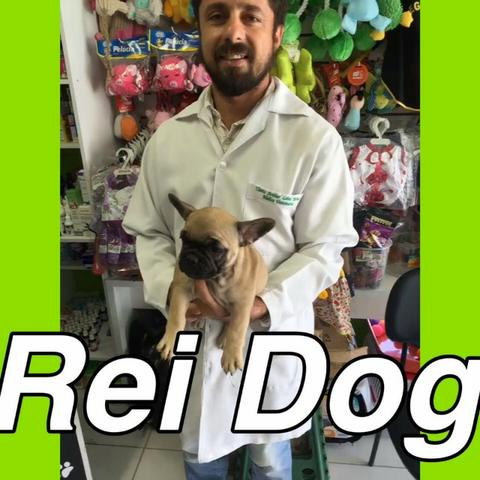 Bulldog Francês lojas Rei dog em 12x, estilo exposição!