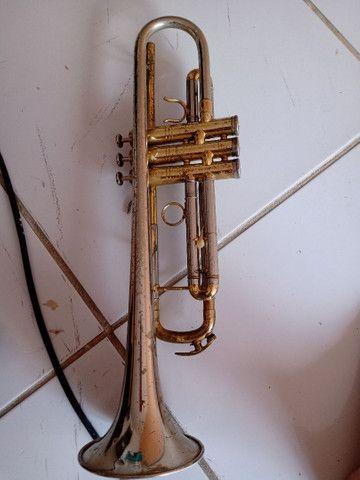 Trompete veril - Foto 3