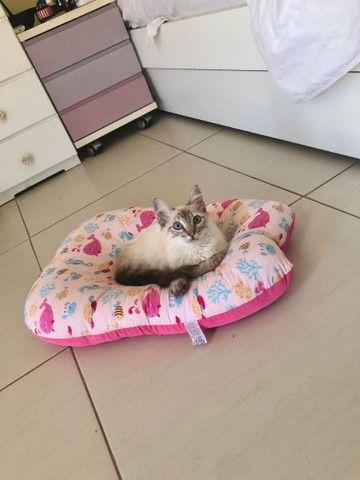 Linda gatinha para adoção! - Foto 2