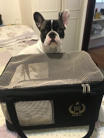 Caixa para transporte aéreo de animal Gol