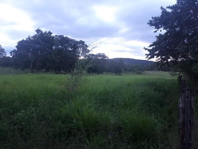 Sitio próximo do manso - Foto 14