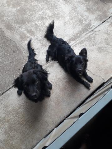 Doação de 2 cachorrinhas - Foto 3