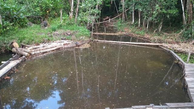 50 hectares a 25 km de castanhal por 250 mil zap *