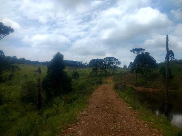 Fazenda em Tijucas do Sul -PR - Foto 10