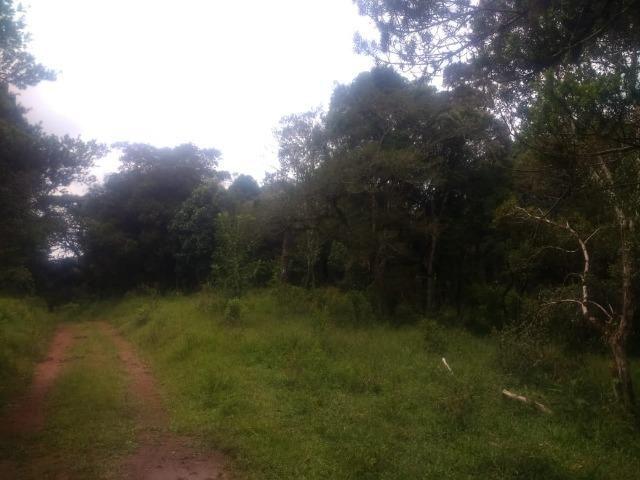 Fazenda em Tijucas do Sul -PR - Foto 6