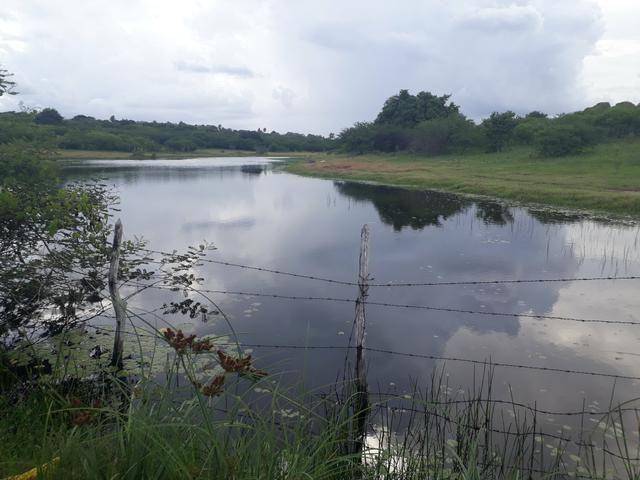 Granja com 15 hectares em vera cruz com riacho perene etc - Foto 4