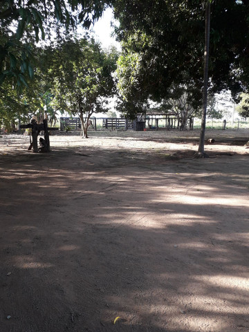 chácara no município de alvorada -to  - Foto 4