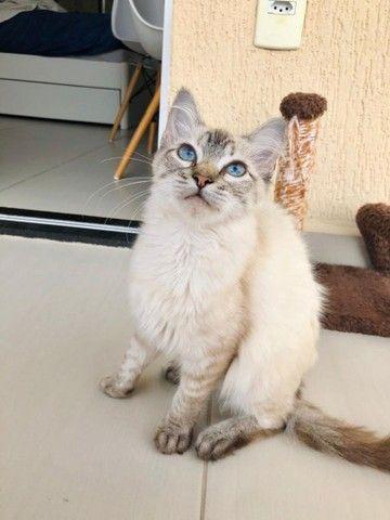 Linda gatinha para adoção!