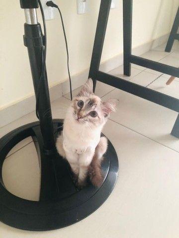 Linda gatinha para adoção! - Foto 3