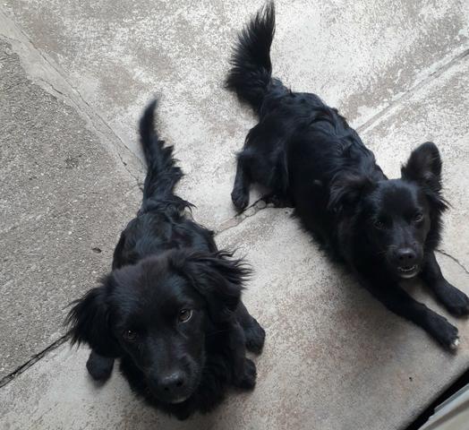 Doação de 2 cachorrinhas - Foto 2