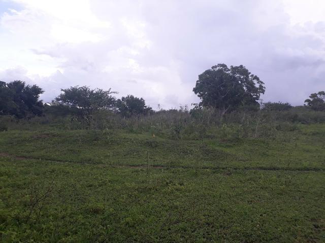 Granja com 15 hectares em vera cruz com riacho perene etc - Foto 3
