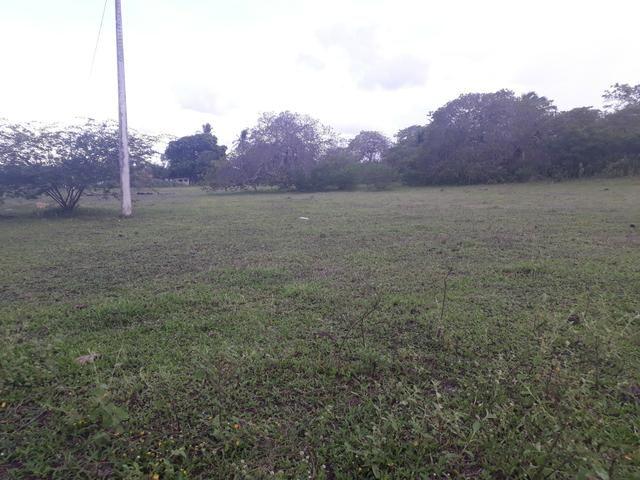 Granja com 15 hectares em vera cruz com riacho perene etc - Foto 6
