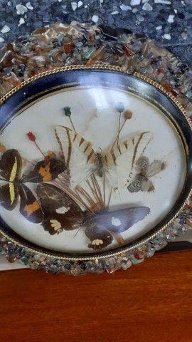 Quadro antigo com borboletas - Foto 5