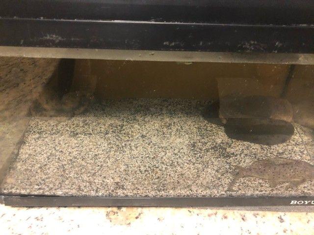 Substrato importado para aquário $20 reais - Foto 2