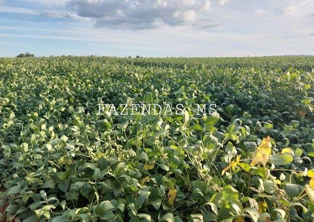 Fazenda 245 hectáres Dourados-MS terra argilosa 40 anos em lavoura - Foto 3