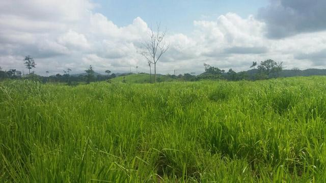 Fazenda pra gado 1.780 reais por media por hectare