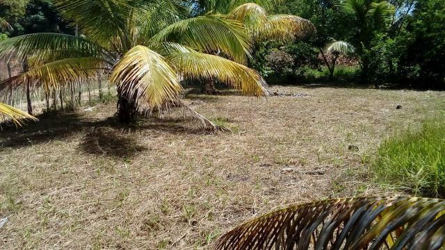 Terreno na Ilha