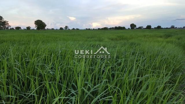 Área rural 47.000 ha - Dupla Aptidão - Foto 6