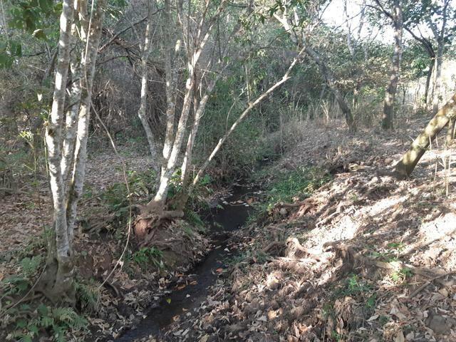 Urgente Vendo Meio Alqueire Prox a Teresópolis e Goianápolis Nerópolis Urgente Muita Água - Foto 8