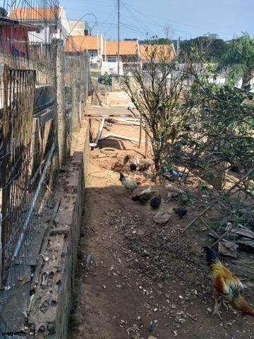 Vendendo galinhas - Foto 3