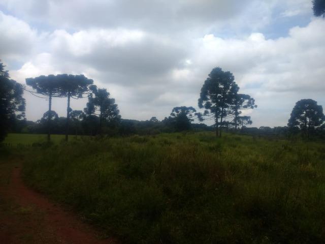 Fazenda em Tijucas do Sul -PR - Foto 11