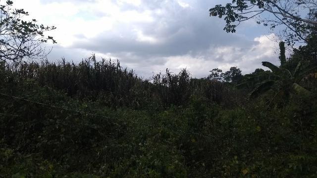 50 hectares a 25 km de castanhal por 250 mil zap * - Foto 9