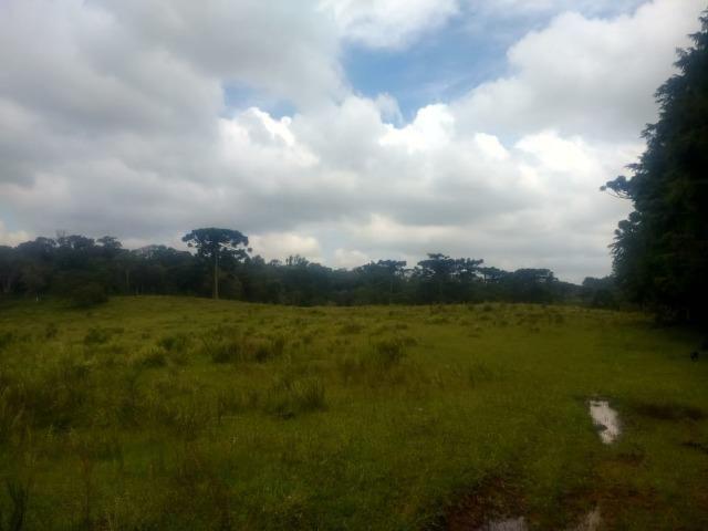 Fazenda em Tijucas do Sul -PR - Foto 3