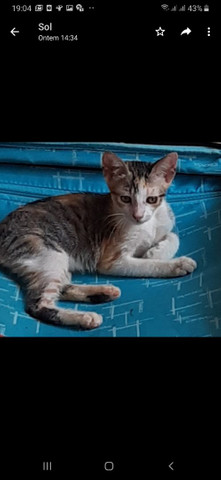 Adote um gato - Foto 2